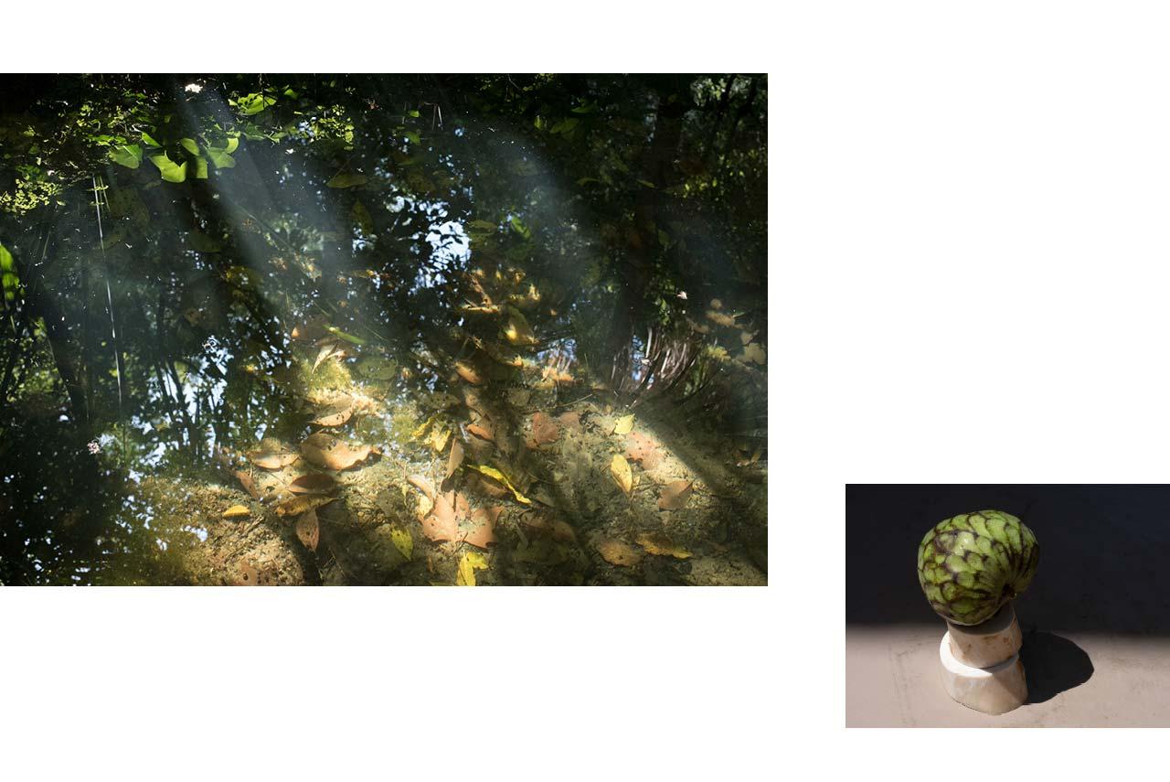 Malaga : jardin botanique, reflet du ciel dans ruisseau boueux. — Toulouse : fin de repas, nature morte anone et os.