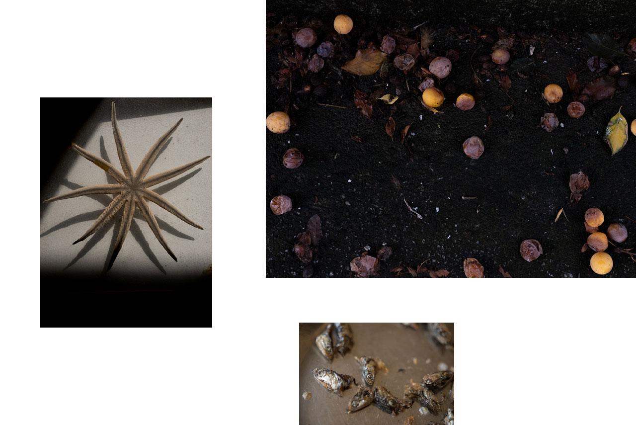 Pays basque : reste d'un repas, nature morte, finitude. — Pays basque : fin d'été, nature morte, pourriture, Nagori. — Toulouse : étoile de mer, contraste, lumière vive, nature morte, clair-obscur.