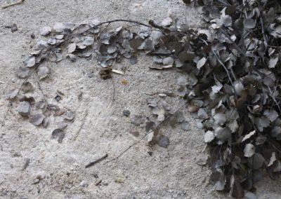 Sarajevo: feuilles séchées.