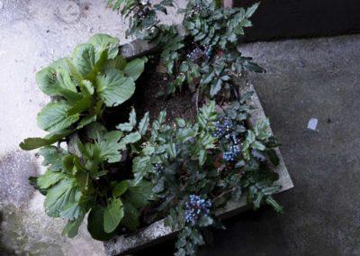 Sarajevo: plante décorative dans cité d'habitations modestes.