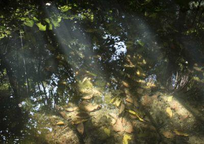 Malaga: jardin botanique, reflet du ciel dans ruisseau boueux.