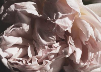 Corinne Deniel, Incessante finitude, image 14