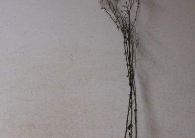 Plante sauvage, médicinale, Afrique, Vaudou, brousse, magie.