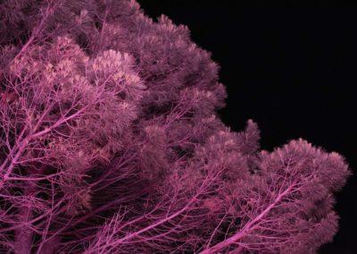 Arles: néon, zone industrielle, hôtel Kiriad, nuit, rose.