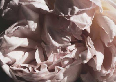 Rose: cœur, froissé, pli, érotisme, sexe féminin, chair.