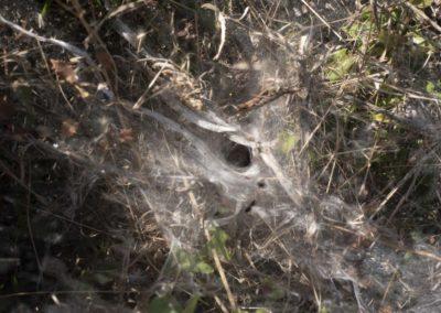 Toile. Toile d'araignée.